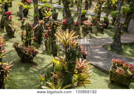 bromeliad plant in the park