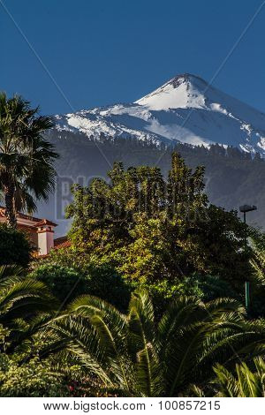 View Of El Teide Volcano With Pine Forest-spain