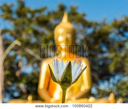 White Lotus And Golden Buddha