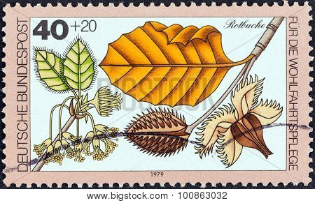 GERMANY - CIRCA 1979: A stamp printed in Germany shows Red beech