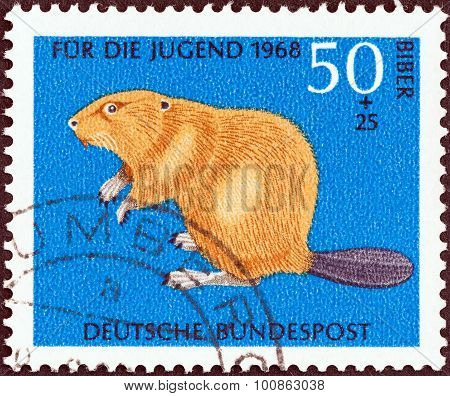 GERMANY - CIRCA 1968: A stamp printed in Germany shows Eurasian beaver (Castor fiber)