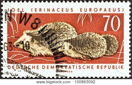 GERMAN DEMOCRATIC REPUBLIC - CIRCA 1963: A stamp printed in Germany shows West European hedgehogs