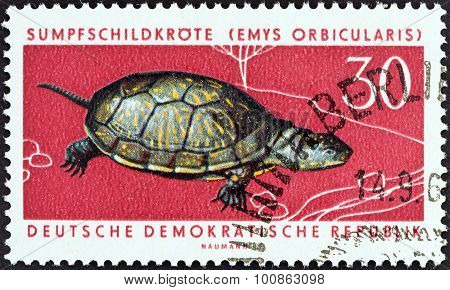 GERMAN DEMOCRATIC REPUBLIC - CIRCA 1963: A stamp printed in Germany shows European pond tortoise