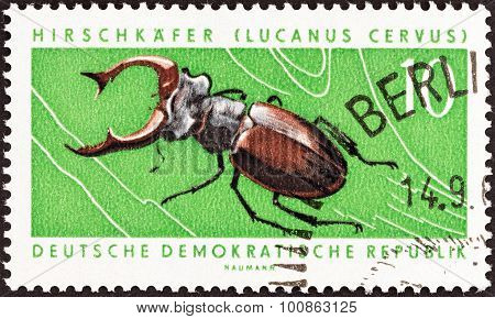 GERMAN DEMOCRATIC REPUBLIC - CIRCA 1963: A stamp printed in Germany shows Stag beetle