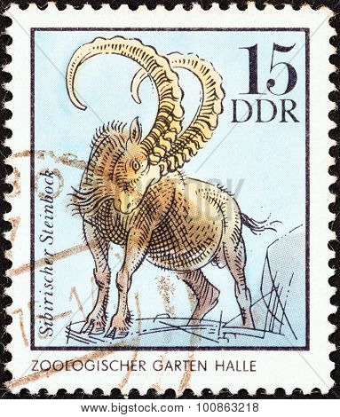 GERMAN DEMOCRATIC REPUBLIC - CIRCA 1975: A stamp printed in Germany shows a Siberian Ibex