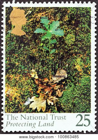 UNITED KINGDOM - CIRCA 1995: A stamp printed in United Kingdom shows Oak seedling
