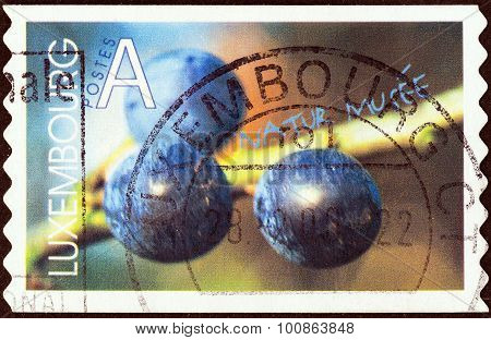 LUXEMBOURG - CIRCA 2002: A stamp printed in Luxembourg shows Blackthorn berries