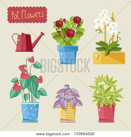 Beautiful house plants.
