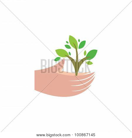 Plant In Human Hands