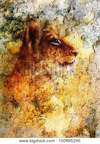 Little lion cub head. animal painting, abstract color background with spots and crackle.