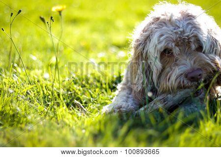 Cute Puppy Portrait in Green Grass