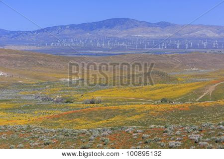 Wild Flower At Antelope Valley