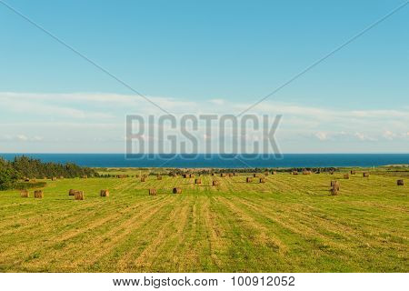 Scenic View Of Hay Stacks On Sunny Day