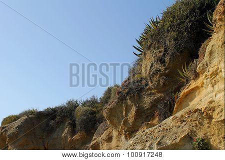 Laguna Cliff