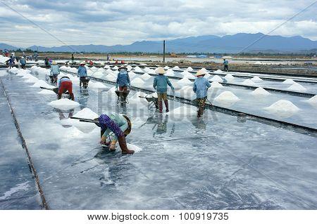 Asia Worker, Salt Marsh, Working