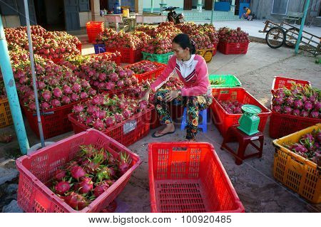 Farmer, Dragon Fruit, Dragonfruit, Trader