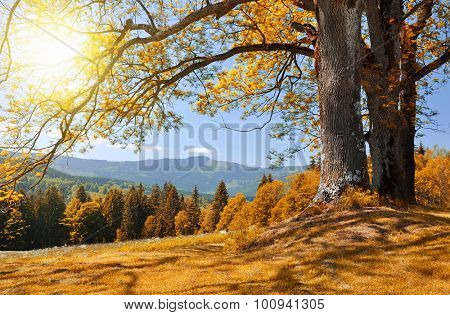 Autumn landscape in the national park Sumava - Czech Republic