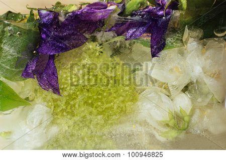 Frozen   Flower Of         Jessamine And Hydrangea, Campanula