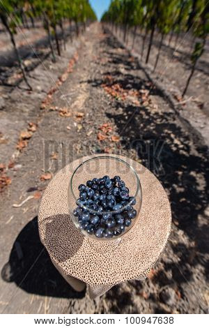 Wine Glass With Red Wine Grapes On Table In Vineyard
