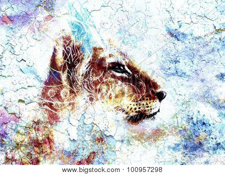 Little lion cub head. animal painting, abstract color background with ornaments and crackle