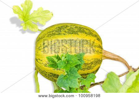 Pumpkin With Haulm And Leaves On A Light Background