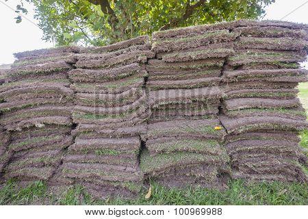 Grass Sods Landscaping