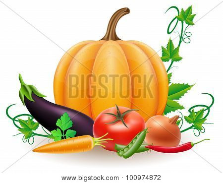 Pumpkin And Autumn Harvest Vegetables Vector Illustration