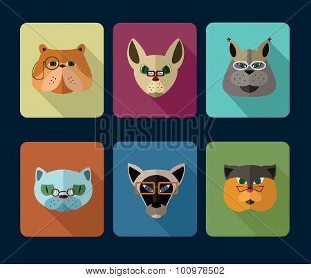 Big set of vector icons of cats.