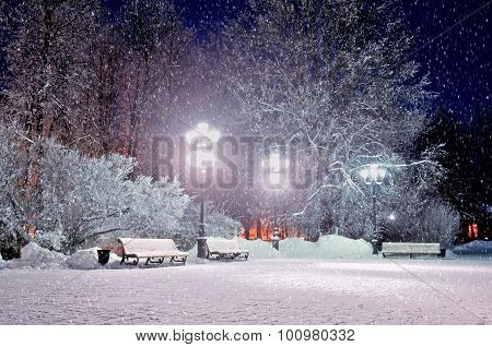 The Winter Evening In The Park