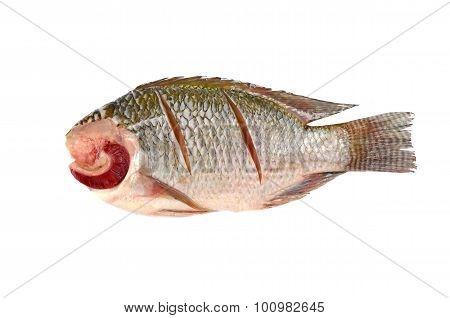 Nile Tilapia On A White Background