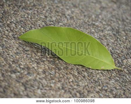 Fallen Leaf On Pathway