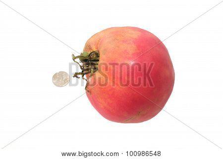 Big tomato on white background
