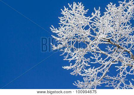 Snowy Ice On Tree In Winter Wonderland With Blue Sky