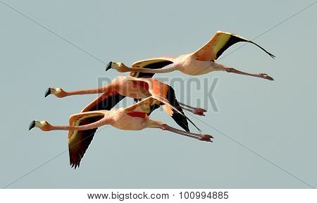 Flying Flamingos