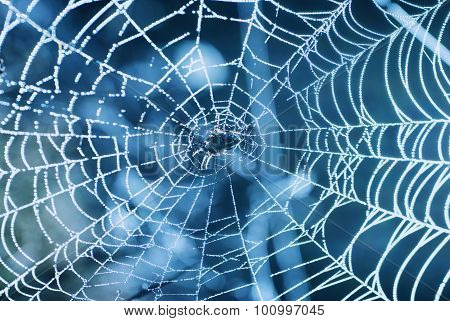 Spider Web With Shiny Blue Drops