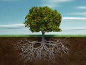 stock photo of apple tree  - Conceptual tree with apple and root  - JPG