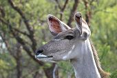 foto of veld  - An antelope standing in a veld with trees in the background - JPG