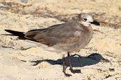 A Seagull At Beach