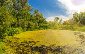foto of boggy  - swamp sucked duckweed green with blue sky in the forest landscape Russia Summer - JPG