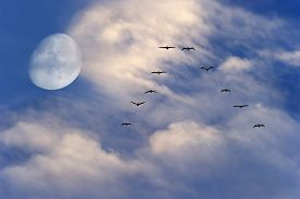 stock photo of moon silhouette  - Birds flying silhouette moon is two birds soaring to the moon with a rich vibrant white cloudscape and blue sky background - JPG