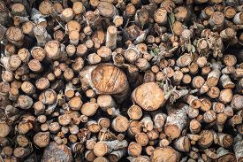 stock photo of logging truck  - Pile of wood logs on truck for background - JPG