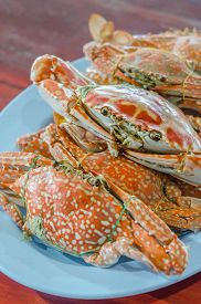 pic of cooked crab  - steamed flower crab or blue crab blue manna crab sand crab - JPG