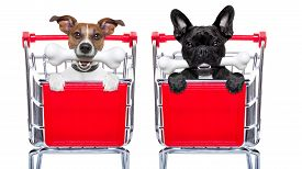 stock photo of bag-of-dog-food  - couple of two dogs together inside a shopping cart trolley behind a blank empty banner or placard with a bone in mouth isolated on white background - JPG