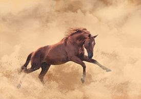 pic of sandstorms  - red horse run in the big sandstorm - JPG