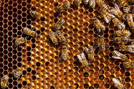 stock photo of honeycomb  - Close up view of the working bees on honeycomb - JPG