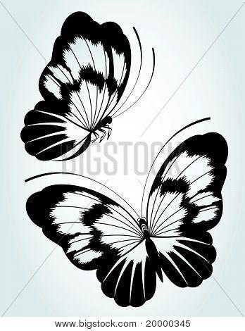 Deux papillons noirs sur fond blanc