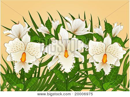 Background with beautiful color orchids
