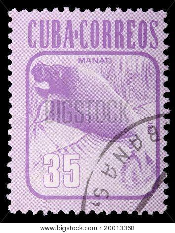 Cuba - Circa 1981: A 35-centavo Stamp Printed In Cuba Shows A Manatee (manati, Trichechus Manatus),