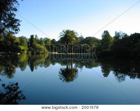 Palm Trees Over A Beautiful Blue Lake