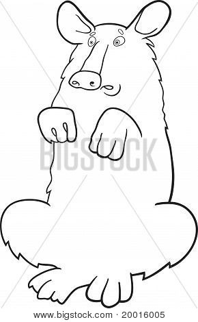 Baribal American Black Bear For Coloring Book
